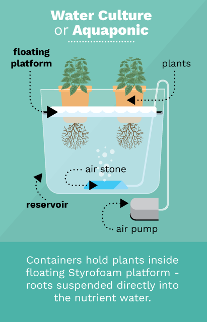 A simple diagram of one version of a hydroponic system, similar to the system Wang's group is developing. The group did not wish to disclose images of their design due to the competitive nature of the field. Graphic from Fix.